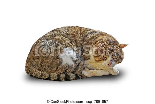cat on white - csp17891857