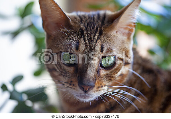 cat - csp76337470