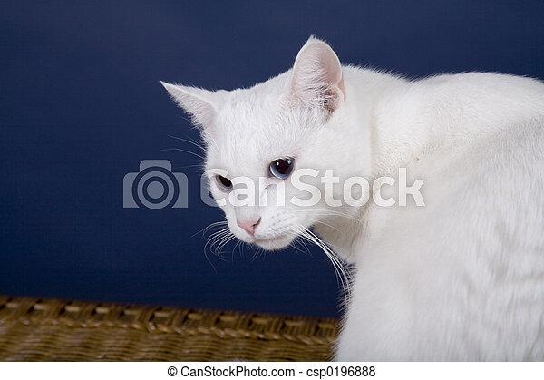 Cat - csp0196888