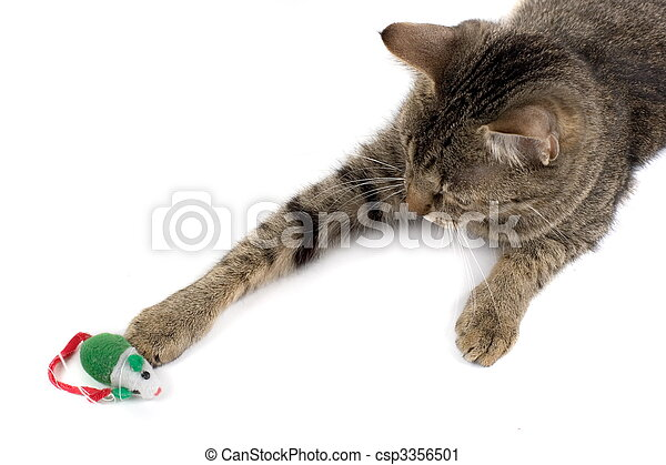 Cat Playing With Mouse - csp3356501