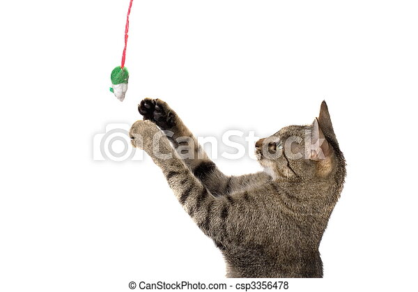 Cat Playing With Mouse - csp3356478