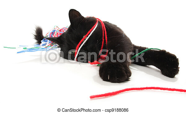 Cat playing with yarn - csp9188086