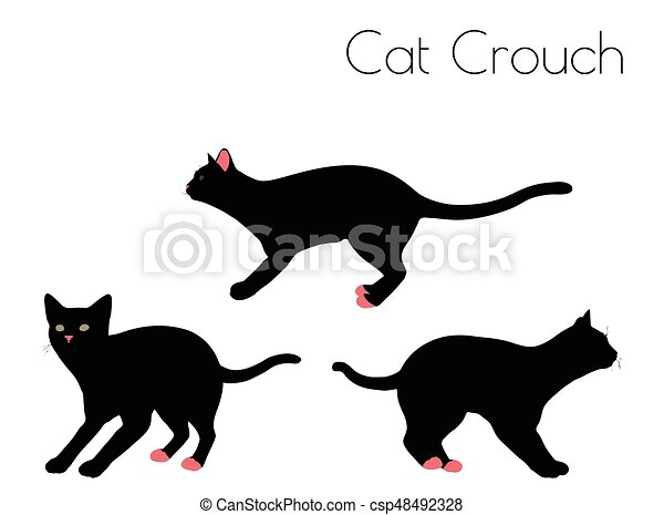 cat silhouette in Crouch Pose - csp48492328