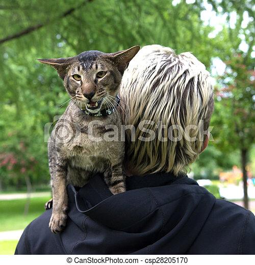 cat sit on the shoulder - csp28205170