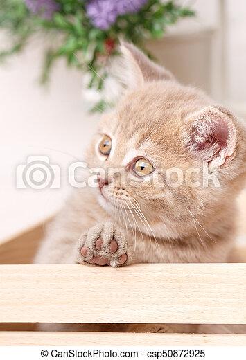 Cat sitting in a box - csp50872925