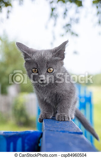 cat sitting in the grass - csp84960504