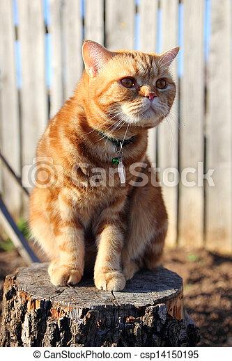cat sitting on a tree stump - csp14150195