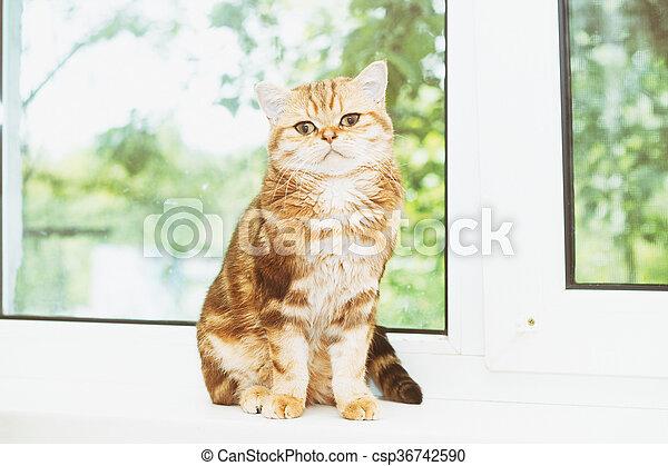 cat sitting on a windowsill - csp36742590