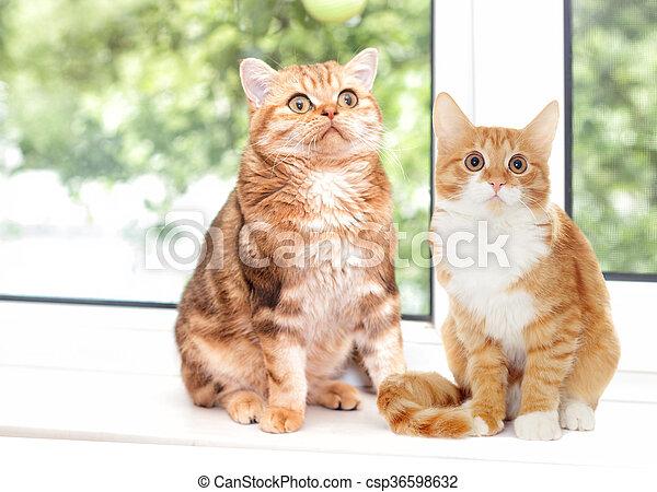 cat sitting on a windowsill - csp36598632