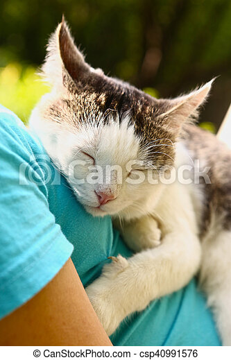 cat sleeping on human body breast close up - csp40991576