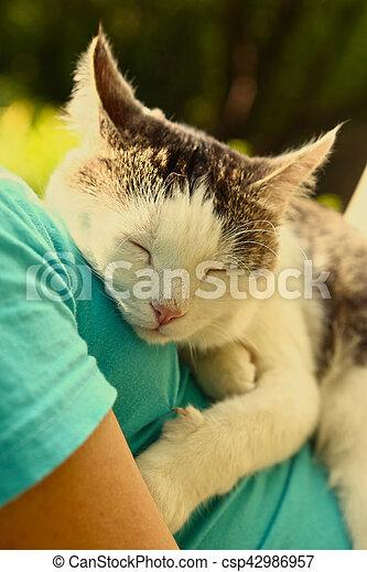 cat sleeping on human body breast close up - csp42986957