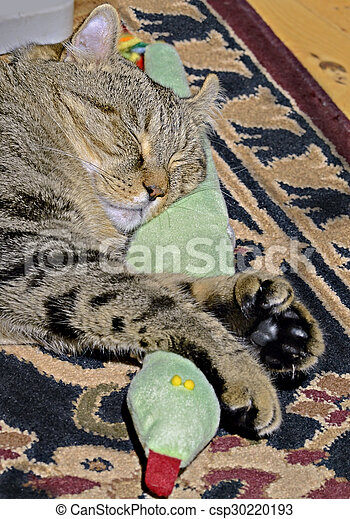 Cat Sleeping With Snake - csp30220193
