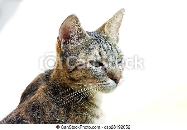 Cat - csp28192052