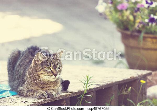 Cat - csp48767055