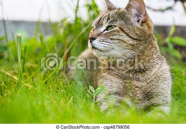 Cat - csp48799056