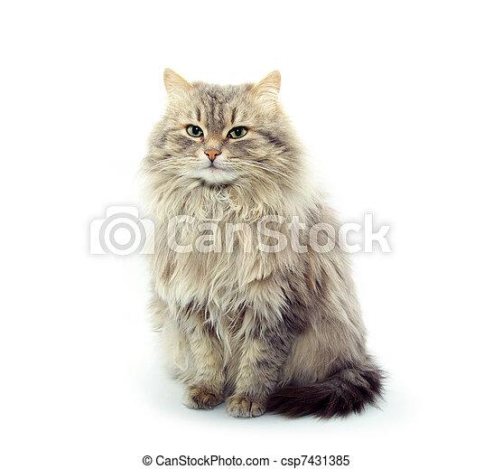 cat   - csp7431385