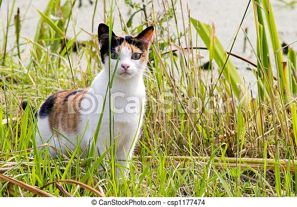 Cat - csp1177474