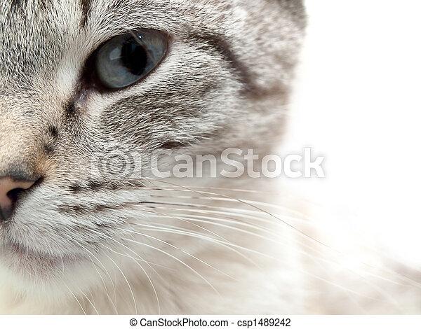 cat - csp1489242