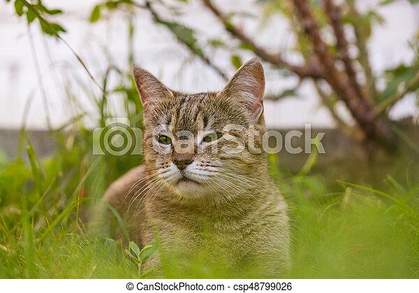 Cat - csp48799026