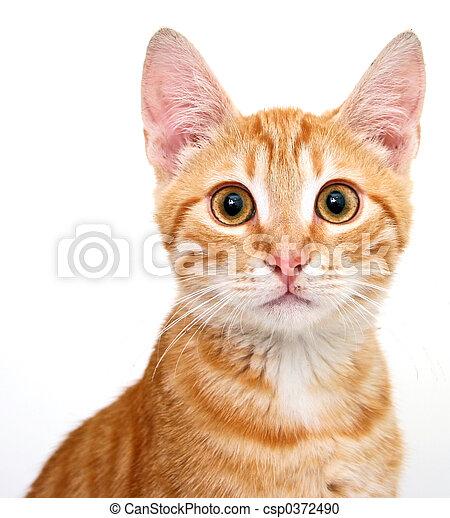 cat - csp0372490