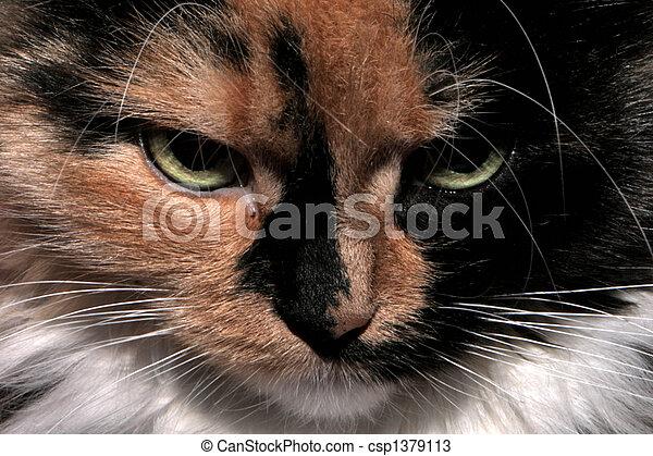 Cat - csp1379113