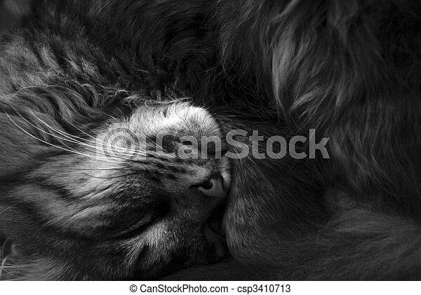 Cat - csp3410713