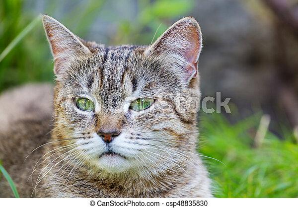 Cat - csp48835830