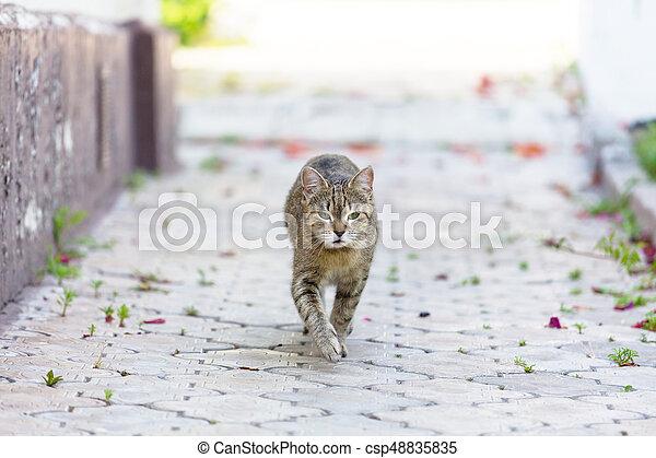 Cat - csp48835835