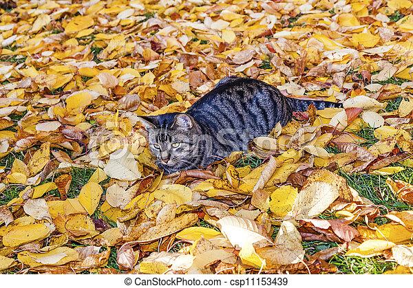 cat strolling around in the garden with foliage - csp11153439