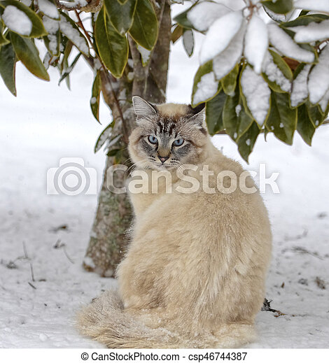 Cat Under a Tree in the Snow - csp46744387