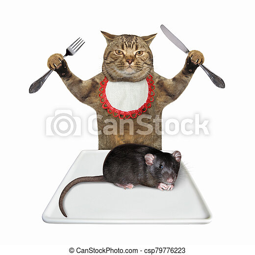 Cat wants to eat rat 2 - csp79776223