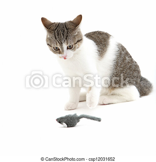 Cat watching a toy mouse in anticipation - csp12031652
