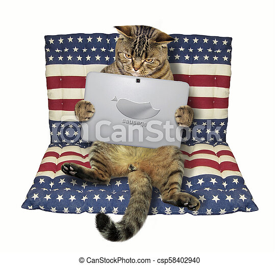 Cat with a laptop on an airbed - csp58402940