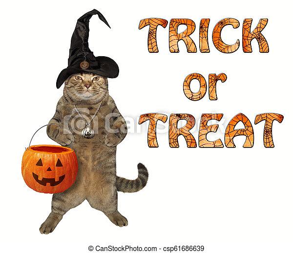 Cat with a pumpkin basket 2 - csp61686639