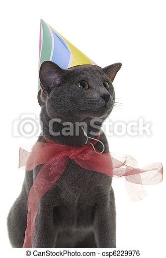 Cat With Birthday Hat And Ribbon