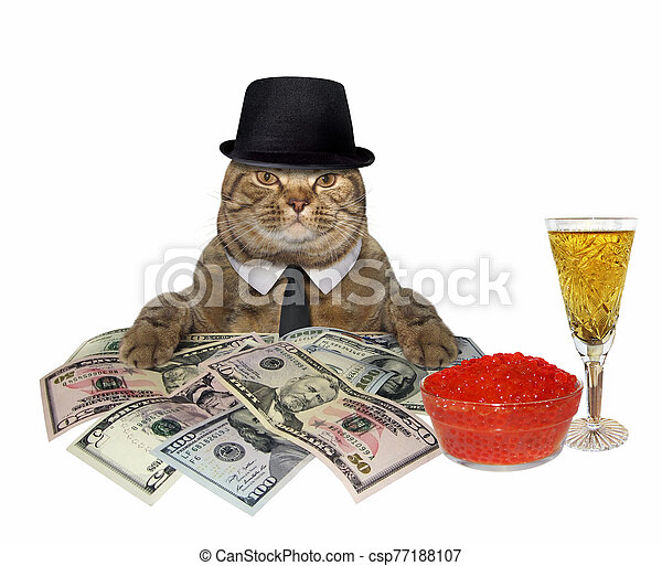 Cat with champagne and money 2 - csp77188107