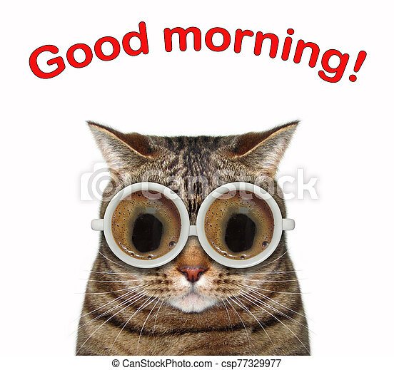Cat with coffee glasses 2 - csp77329977