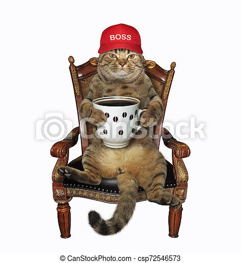 Cat with coffee in an armchair 2 - csp72546573