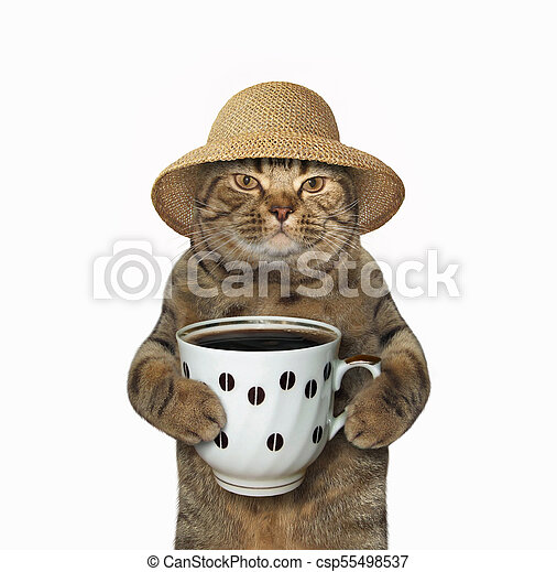 Cat with cup of coffee - csp55498537