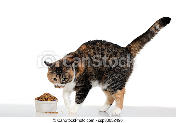 cat with food in bowl - csp30052490