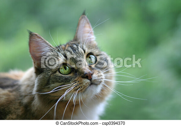 Cat with green eyes - csp0394370