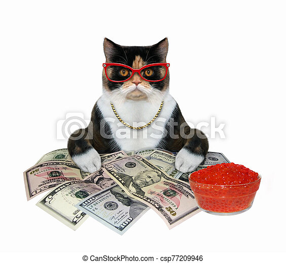 Cat with red caviar and money 2 - csp77209946