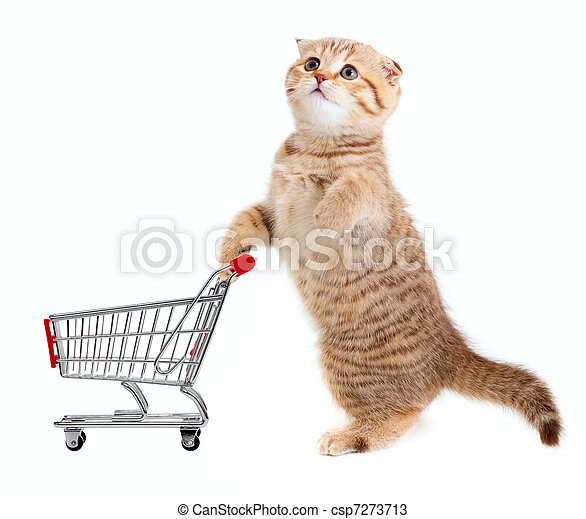 cat with shopping cart isolated on white - csp7273713