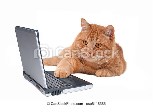 Cat working at the computer - csp5118385