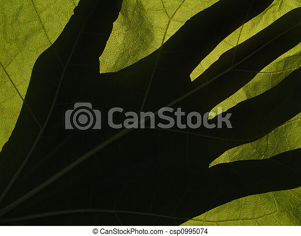Catalpa Leaf Backlit with Hand Shadow - csp0995074