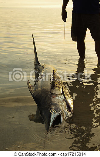 Catch of the day: fisherman with his swordfish - csp17215014