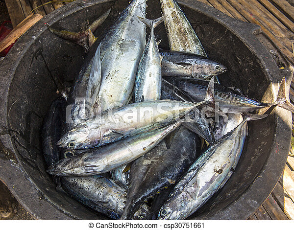 catch of the day of a fisherman - csp30751661