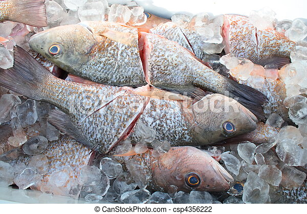 Catch of the day - csp4356222