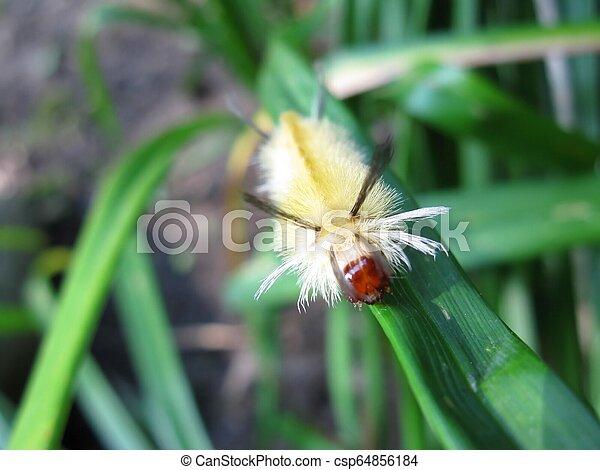 Caterpillar looking at camera - csp64856184