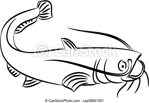 catfish illustration illustration of a catfish clipart vector rh canstockphoto com catfish clip art and designs for sale catfish images clip art